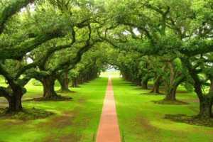 cf castellabate parchi e natura