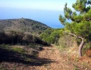 Sentiero-monte-Licosa