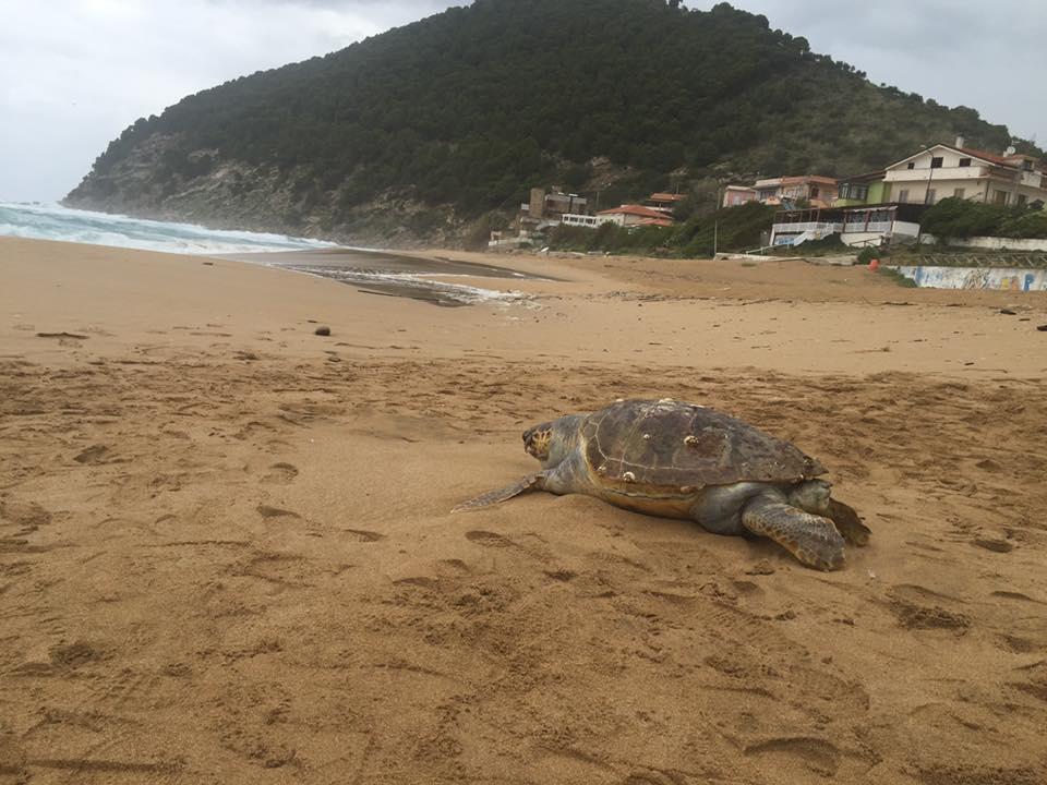 tartaruga spiaggia lago castellabate
