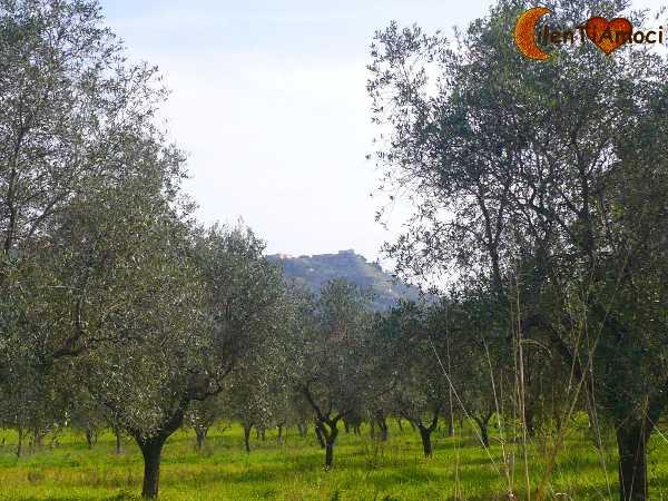 ulivi natura castellabate